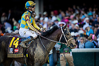 LOUISVILLE, KY - MAY 06: Classic Empire #14 with Julien Leparoux up returns after finishing 4th in the Kentucky Derby at Churchill Downs on May 6, 2017 in Louisville, Kentucky. (Photo by Alex Evers/Eclipse Sportswire/Getty Images)