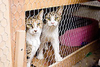 Stray cats are trapped, neutered/spayed, and returned to their environments at a Brooklyn facility on January 18, 2006.