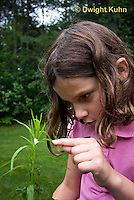 SP08-676z  Child investigating Meadow Spittlebug foam home, Philaenus spumarius