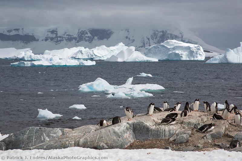 Cuverville Island, Antarctic peninsula