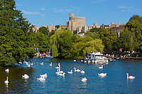 Great Britain, England, Berkshire, Windsor: boats and swans on River Thames with Windsor Castle | Grossbritannien, England, Berkshire, Windsor: Schloss Windsor an der Themse