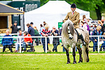 Day 4. Royal Windsor Horse Show. Windsor. Berkshire. UK.  HRH her Majesty Queen Elizabeth ll's pony Balmoral Mandarin. Competing in the BSPS Mountain and Moorland Ridden (Dales, Highland, Fell).  12/05/2018. ~ MANDATORY Credit Elli Birch/Sportinpictures - NO UNAUTHORISED USE - 07837 394578