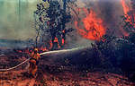 August 19, 1992 Angels Camp, California -- Old Gulch Fire— Firefighter rushes with hose to put down fire on Fullen Road. The Old Gulch Fire raged over some 18,000 acres, destroying 42 homes while threatening the Mother Lode communities of Murphys, Sheep Ranch, Avery and Forest Meadows.