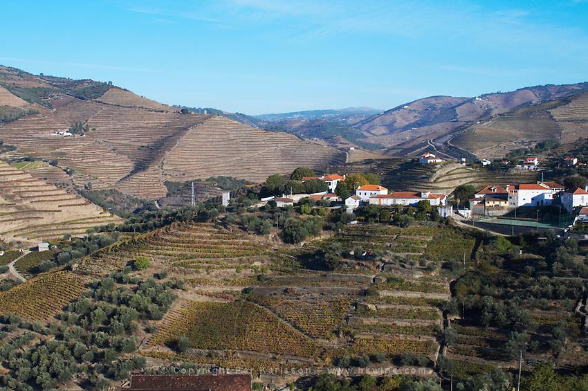 vineyards vale de mendiz douro portugal