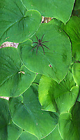 Spiders of various shapes and sizes are commonly found during night walks in the jungle.