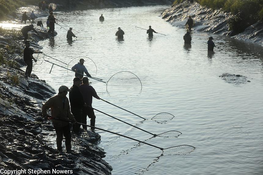 Dipnetting on Fish Creek near Wasilla, Alaska.