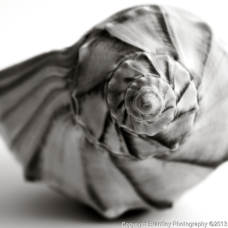 Black and white fine art sea shell photography