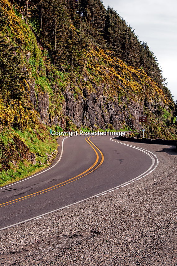 An S-Curve on the Pacific Coast Highway 101 at Devil's Elbow, Oregon.