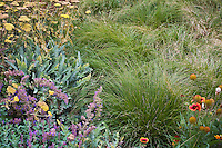 Meadow garden with grass Sporobolus heterolepis (Prairie dropseed) edged with perennials, Achillea 'Moonshine' and Catmint (Nepeta faasenii), Denver Botanic Garden