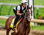 LOUISVILLE, KENTUCKY - APRIL 30: War of Will, trained by Mark Casse, exercises in preparation for the Kentucky Derby at Churchill Downs in Louisville, Kentucky on April 30, 2019. John Voorhees/Eclipse Sportswire/CSM