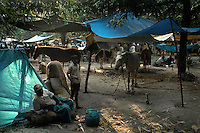 A horse ownner rest at his make shift stable in Sonepur fair ground. Bihar, India, Arindam Mukherjee.