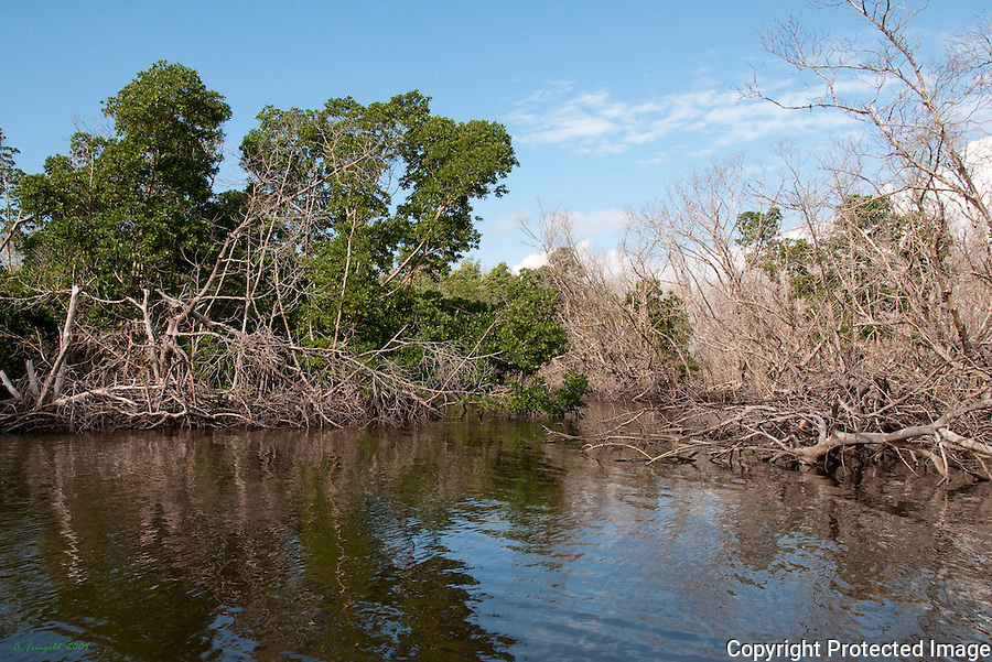 Flamingo Park, Florida Everglades National Park, Mangroves, Fallen Trees<br /> <br /> CLICK ON ADD TO CART ABOVE TO SEE AVAILABLE STYLES, SIZES AND PRICES