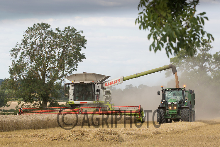 Harvesting Winter Wheat in Rutland<br /> Picture Tim Scrivener 07850 303986<br /> &hellip;.covering agriculture in the UK&hellip;.
