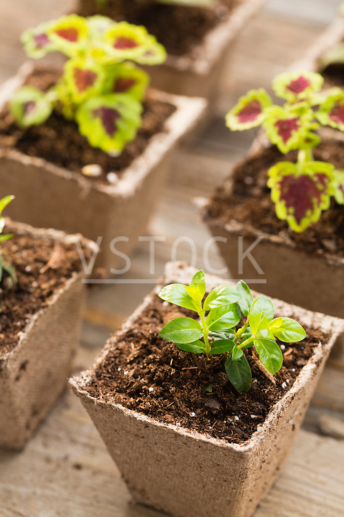Freshly potted plants
