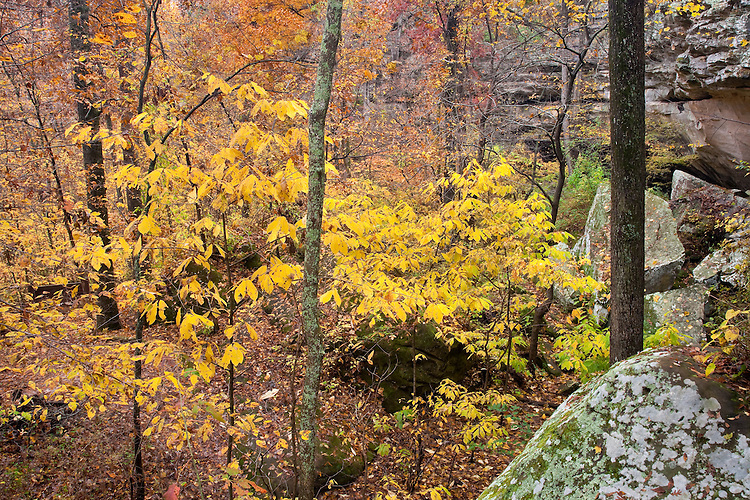Fall color scene at Devil's Stand Table; Giant City State Park, IL