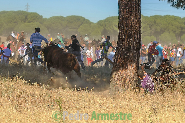 A mounted horseman are seen during the Bull of the Vega in Tordesillas, near Valladolid, 17 September 2013. The festival is one of the oldest in Spain with roots dating back to the fifteenth century. The bull has to be enticed across the river from the village to the plain 'Vega' before it can be killed to honour the 'Virgen de la Pena'. (c) Pedro ARMESTRE