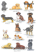Kate, CUTE ANIMALS, LUSTIGE TIERE, ANIMALITOS DIVERTIDOS, paintings+++++New breeds 3,GBKM378,#ac#, EVERYDAY ,dogs,dog