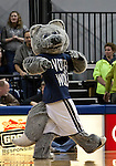 January 14, 2012:   Nevada Wolf Pack mascot Wolfie dances during their game against the Hawai'i Rainbow Warriors during their NCAA basketball game played at Lawlor Events Center on Saturday night in Reno, Nevada.