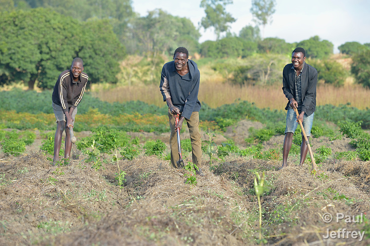 Chomex Nkhambule (center) works on his farm with his sons Mzee (left) and Aron in Edundu, Malawi. Families in the village have benefited from intercropping, crop rotation, and composting practices they learned from the Malawi Farmer-to-Farmer Agro-Ecology project of the Ekwendeni Mission Hospital AIDS Program, a program of the Livingstonia Synod of the Church of Central Africa Presbyterian. The new farming skills and techniques convinced Nkhambule to come back to the village from South Africa, where he was working and sending remittances home.