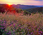 Shenandoah National Park, VA<br /> Sunrise crests at the ridges of the Shenandoah Mountains seen from Thornton Overlook