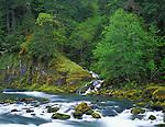 Umpqua National Forest, OR<br /> Fox Creek flows though spring forest into the North Umpqua River
