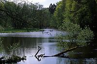 Deutschland, Hamburg, im Duvenstedter Brook