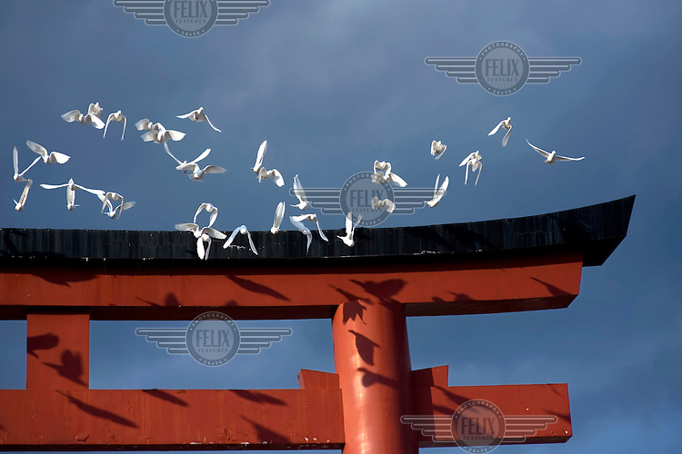Doves fly around the Torii Gate of the Tsurugaoka Hachimangu Shrine, dedicated to Hachiman, the god of war. /Felix Features