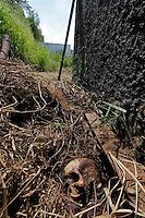 ITAQUAQUECETUBA,SP,SABADO 18 DE FEVEREIRO 2012,CORPO DE HOMEM ENCONTRADO EM ITAQUAQUECETUBA SP,Na tarde deste sabado(18) um homem que trabalha em um terreno de uma construçao,encontrou um cranio de um homem,a policia foi acionada e a pericia se dirigiu ao local constatando que se tratava de um homem branco,sem documentos e estava supostamente a uma semana enterrado no terreno,o corpo ainda estava em decomposiçao.FOTO:WARLEY LEITE-BRAZIL PHOTO PRESS