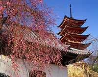 Cherry blossoms at Five-story Pagoda  Miyajima Island, Japan   Historic Pagoda from 1407  Near Itsukushima Jinja  Shrine  Afternoon