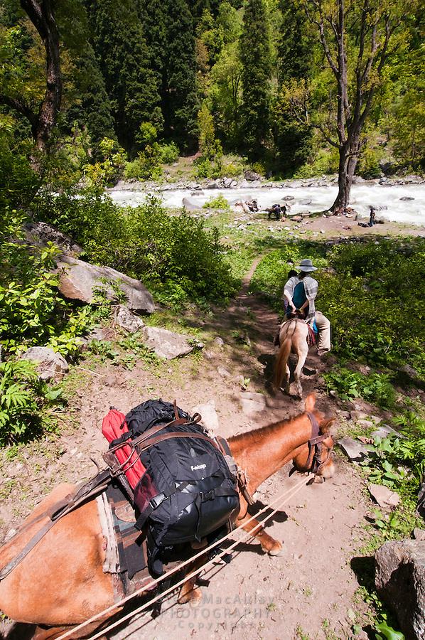 Female traveler on horseback approaching the Kanka River, Indian Himalaya, Kashmir, India