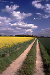 Europe, DEU, Germany, Northrhine Westphalia, Lower Rhine, Xanten, Flowering Rapeseed field in spring, Lonely way, Clouds, Brassica napus var. napus, ....[ For each utilisation of my images my General Terms and Conditions are mandatory. Usage only against use message and proof. Download of my General Terms and Conditions under http://www.image-box.com or ask for sending. A clearance before usage is necessary...Material is subject to royalties. Each utilisation of my images is subject to a fee in accordance to the present valid MFM-List...Contact | archive@image-box.com | www.image-box.com ]