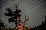 Star Trails, Inyo National Forest, White Mountains, California, USA