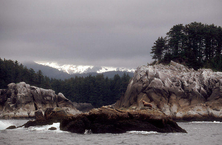 Alaska, Yakobi Island. West Chichagof-Yakobi Wilderness Area, Tongass National Forest, Southeast Alaska's most beautiful island according to kayak author, designer, builder George Dyson. Note the Steller's sea lion atop the foreground ledge, Eumetopias jubatus.