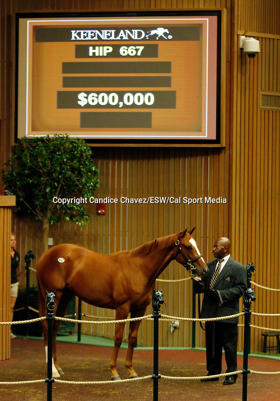 September 16, 2015: Hip 667 Tapit - Stormy Sunday filly consigned by Gainesway.  Candice Chavez/ESW/CSM