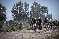 Michael Albasini (AUS/Mitchelton Scott)<br /> <br /> Antwerp Port Epic 2019 <br /> One Day Race: Antwerp > Antwerp 187km<br /> <br /> ©kramon