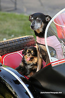 "49er BMW Rally ""Dogs And Cat""_gallery"