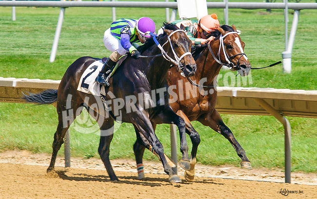Uplifting winning at Delaware Park on 6/15/17
