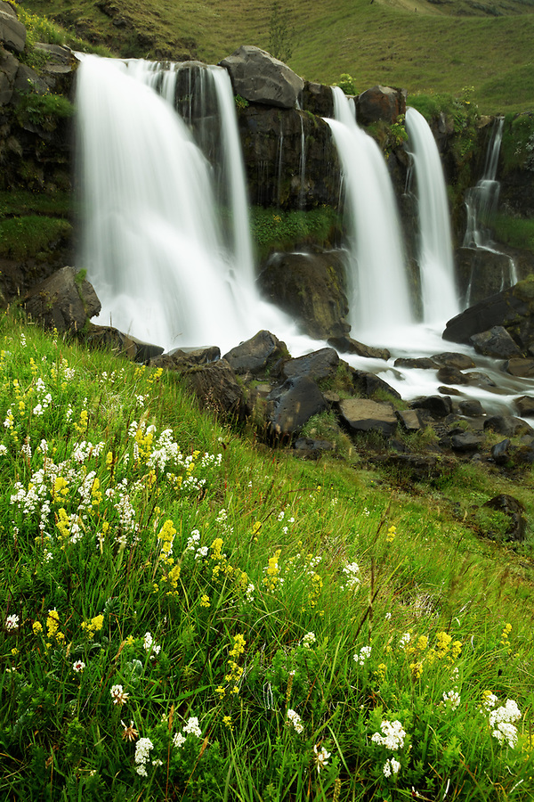 Meadow of blooming wildflowers and Merkjárfoss waterfall, South Region, Iceland