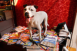 Pitbull at Agence Orile. Pictured with magazines about house prices, immobilier, Paris, France
