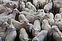 Europe/France/Poitou-Charentes/79/Deux-Sèvres/Villemain: Fromagerie à la ferme de Paul Gorgelet: Le Petit Boisselage -La Chèvrerie -Chèvres attendant d'être traites