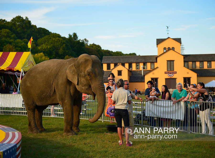 Old Bethpage, New York, USA. September 28, 2014. Families look and learn about Minnie the 8,000 pound African elephant at the Elephant Show, with the Exhibition Hall in the background, at the 172nd Long Island Fair, a six-day fall county fair held late September and early October. A yearly event since 1842, the old-time festival is now held at a reconstructed fairground at Old Bethpage Village Restoration.