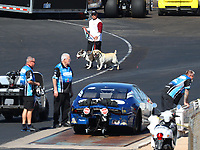 Feb 24, 2018; Chandler, AZ, USA; A man walks his dogs through the pit area as the car of NHRA pro stock driver Alan Prusiensky is weighed at the tech scales during qualifying for the Arizona Nationals at Wild Horse Pass Motorsports Park. Mandatory Credit: Mark J. Rebilas-USA TODAY Sports