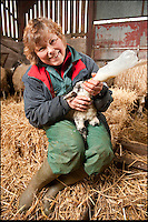BNPS.co.uk (01202 558833).Pic: Phil Yeomans/BNPS..Dinah has to help feed the instant flock of five lambs........Shropshire farmer Dinah Thompson(55) was amazed when her prize ewe 'Mrs Holmes' delivered a quintuplet of tiny lambs this week at her farm near Bewdley...The odds on quintuplets are one in a million, so Dinah could not believe her eyes when four year old Mrs Holmes produced the instant flock. 'I was expecting triplets so after the third popped out I went off for a cup of coffee, when I returned i was amazed to find another two had emerged'..The three girls and two boys are now being bottle fed every four hours as the struggling mum only has two teats to feed her hungry little flock with.