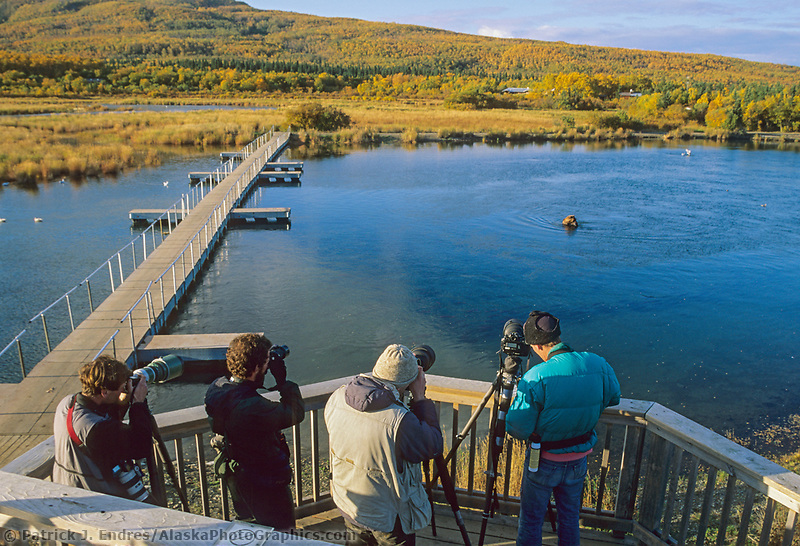 Brown bear viewing and photography, Brooks Lodge, Brooks River, Katmai National Park, Alaska
