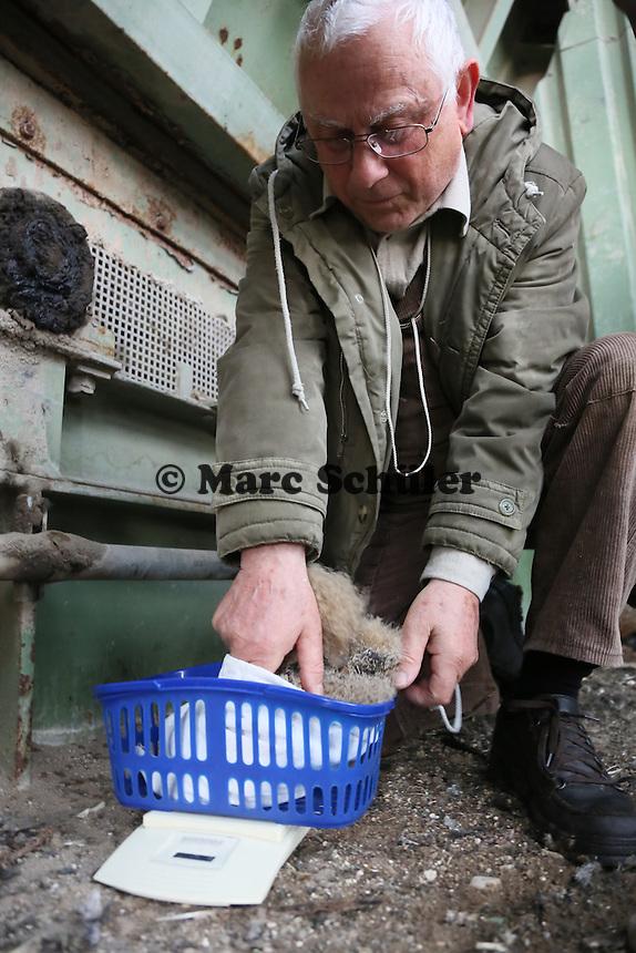 Klaus Hillerich von der Vogelwarte Helgoland wiegt und beringt die jungen Uhus am Abfallzentrum Büttelborn