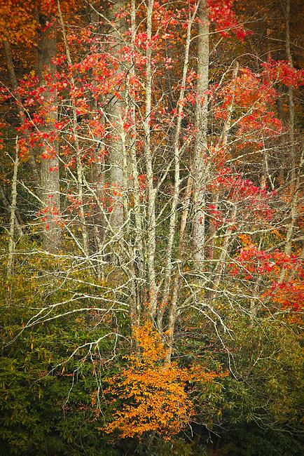Autumn tapastry, Price Lake
