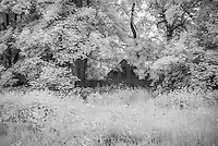 Country Home Hidden in Loose Valley IR