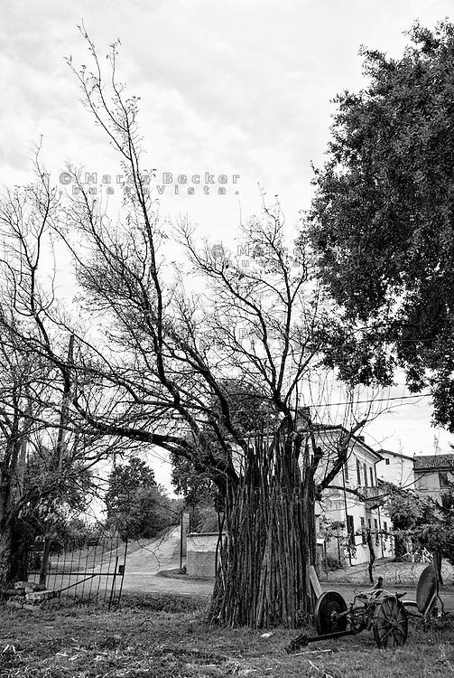 Un aratro e dei bastoni di legno appoggiati a un albero in un campo di un paese vicino a Broni (Pavia) --- A plow and wooden sticks leaning against a tree in a field in a small village near Broni (Pavia)