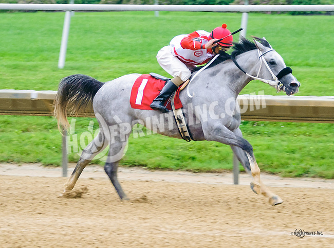 Sweet Honey AA winning at Delaware Park on 6/16/16