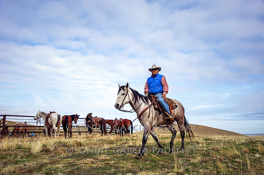 Cowboy riding horseback at a Cattle roundup in Kern County, California<br />